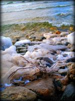 Winter on the Shore by MaddLouise