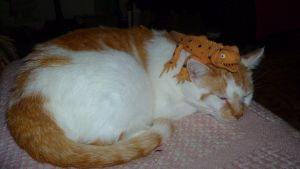 A Cat and His Lizard by FallenAngel1059