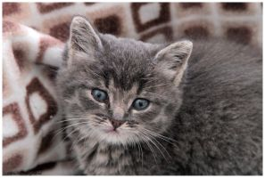 Tommy dumped kitten four weeks old by Claudia008