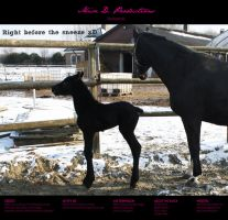 Horse Stock 66 - Friesian by MiszD