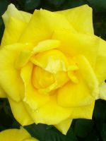 the color yellow by zoron1993