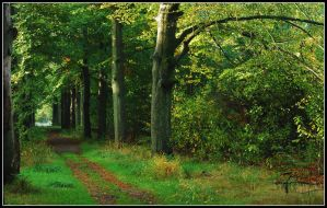 On the October lane 2009 by jchanders