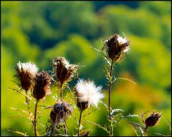 Gone To Seed by bamako