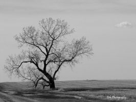 Vast Solitude by erbphotography