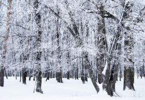 stock: winter forest 8(credit and show the result) by amka-stock