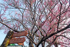 Sign of Spring I by johnchan