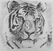 Eye of the Tiger by RoseRain-92