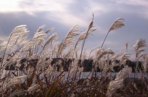cat tails. by brittanyross16