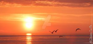 Fly me to the sun by jeje62