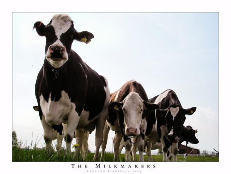 The Milkmakers by tuborg