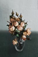Still life with dead nature by NataliaDrepina