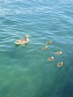 Mama and Her Ducklings 2 by Konimotsinui