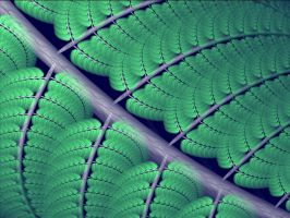Apophysis Fern Frond Zoom by Gibson125
