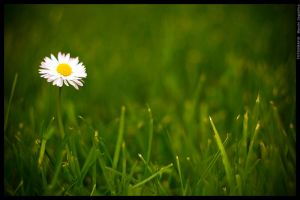 Touch of spring by mjagiellicz
