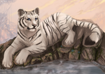 Tiger's rest by FlashW