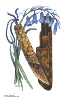 Bluebells and Acorns by emla