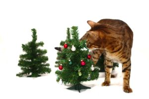 Bengal and Mini Christmas Tree Stock 1 by FurLined