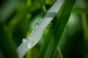 More water drops by Zoltaniev