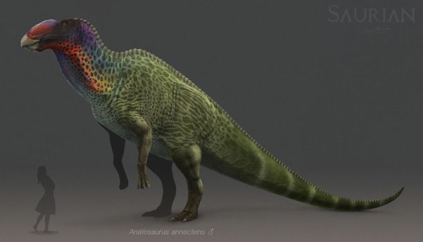 Anatosaurus by ChrisMasna