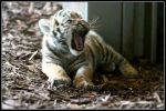 Baby yawn by AF--Photography