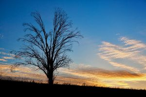 The Lonely Tree by Stomp