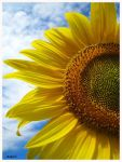 sunflower by chainz426