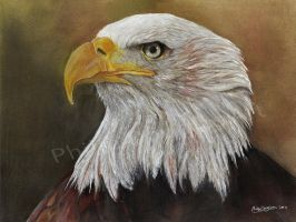 An Eagles Glare by PhilipDouglasArt