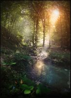 The forest is magic by Vittorio-Pellazza