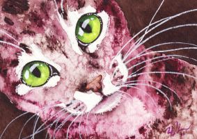 Pink Tabby ACEO by GeocachingOdder