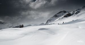 3 larches by rdalpes