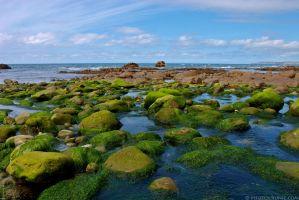 Green Rocks Of Millook by runique