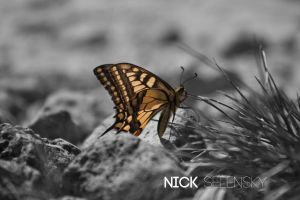 Yellow Butterfly by Nick356