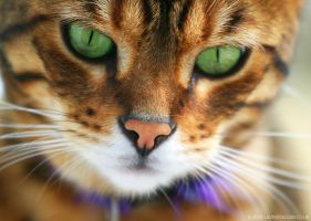 Pretty Pussy Portrait by gdphotography