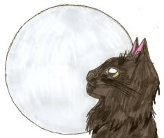 The Cat And The Moon by confuzed-anime-fan