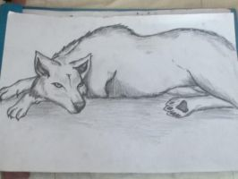 A wolf by IsWonderland