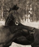 Horses game XII by Lilia73