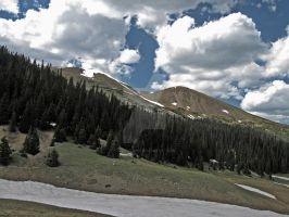 Rocky Mountain Pines by FlashKid105