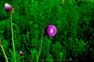 00-Nature-June2015-SAM-0948-HDR-WP-Master by darkmoonphoto