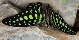 Neon Green Spots by Lydia-distracted