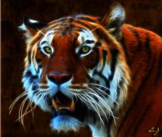 Tiger Study by Lashington
