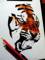 Tiger WIP-3 by AnkitDArt