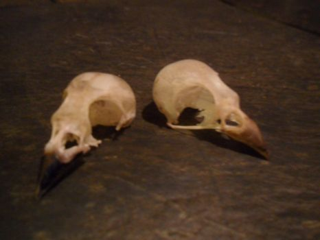 his and her bird skull by ann3tt3