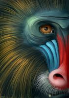 Golden Mandrill by jrtracey
