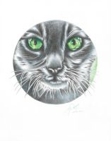 CIRCLE CAT by martyparkerart