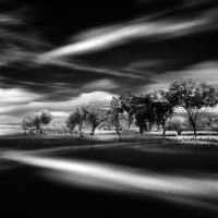 windwalk by arayo