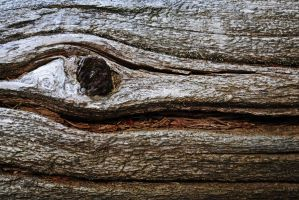 wood texture by LucieG-Stock