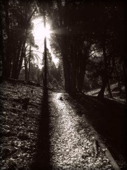 Path I by cankersoar