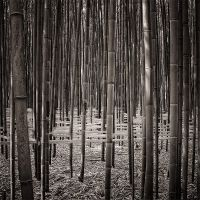 Bamboo art by marcschmidtmayer