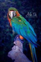 Macaw Portrait by Arkus83