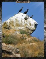 Cormorants 1.4 by inObrAS